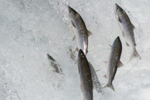 Astaxanthin Norge